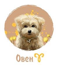 Собака-Овен